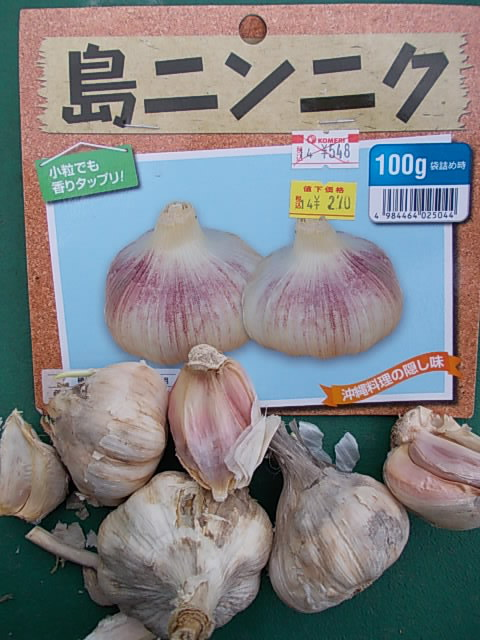 Okinawan garlic 20141123