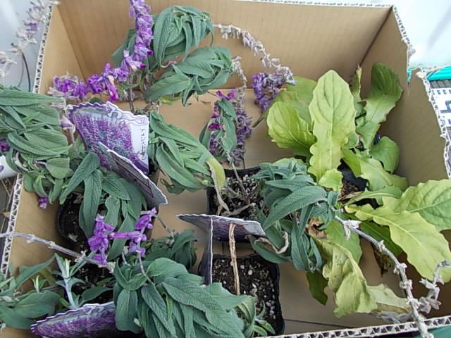 Herb 20141214