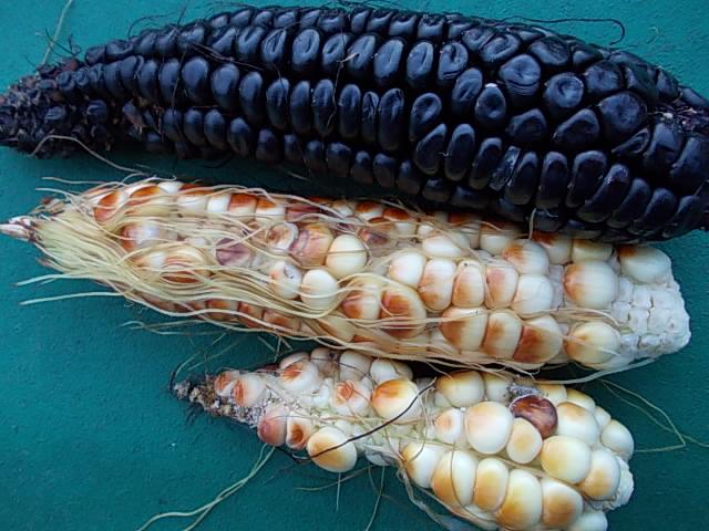 Maiz morado 20141105
