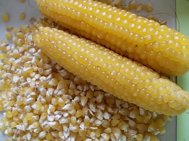 Popcorn 20141006