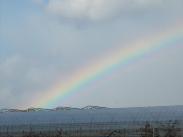 Rainbow 20141201-2