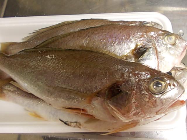 Shiroguchi fish 20141122