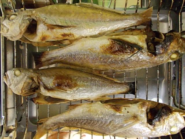 Shiroguchi fish 20141122-2