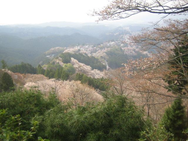 世界遺産 奈良 吉野山 桜2