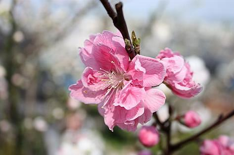 薄いピンク色の花や・・・