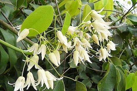 白い花が♪