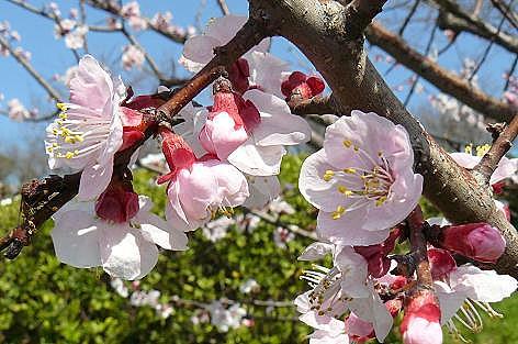 ピンク色の可愛い花♪