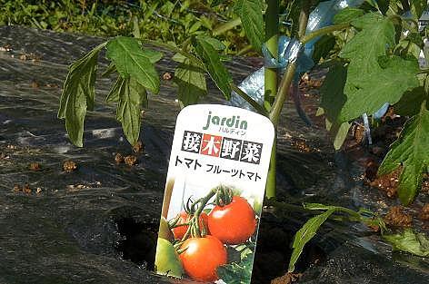 フルーツトマトも♪