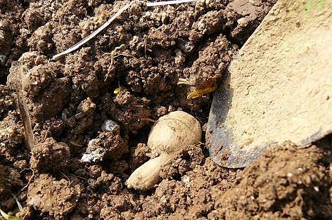 掘って埋めて・・・