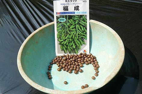 茶豆を植えてみた♪