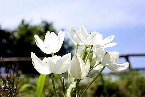 土手に白い花♪