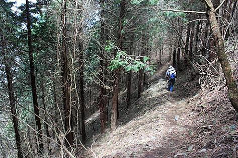 道の脇は針葉樹の斜面♪