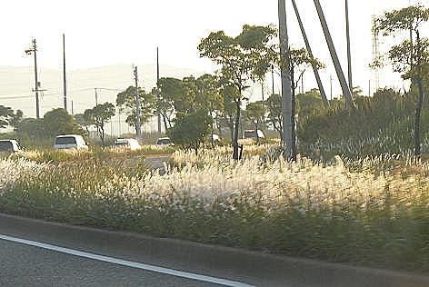 金色の道♪