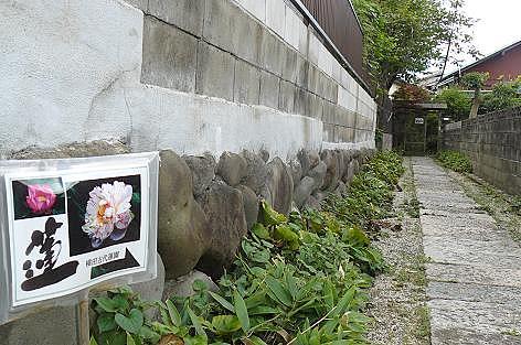 横田古代ハス園♪