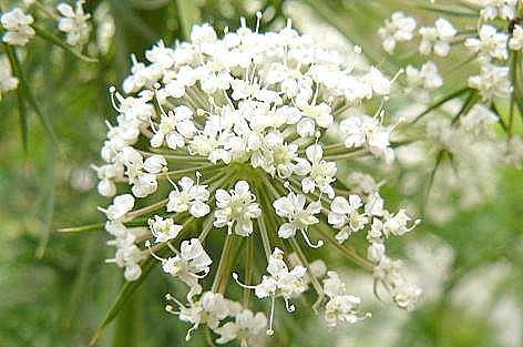 真っ白い花♪