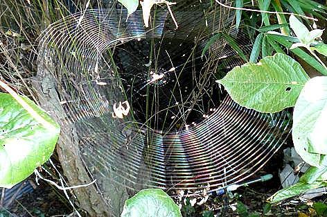 クモの巣作り♪