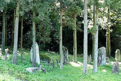 杉木立の中にも♪