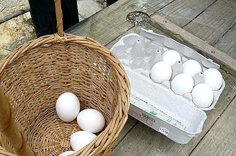 卵は準備(^^)v