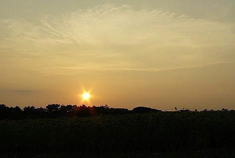 夏の終わりのヒマワリ畑♪