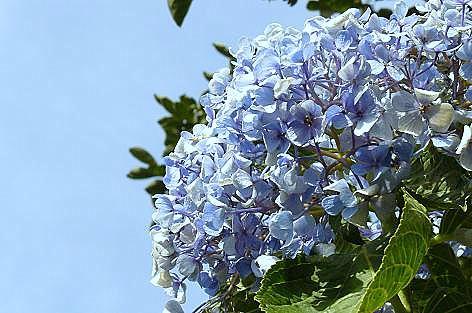 青い花が一輪♪