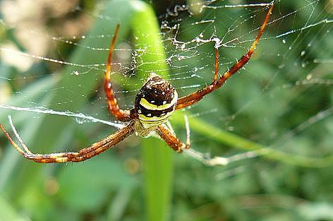 飛んで逃げた蜘蛛♪