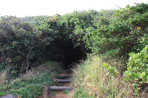 森のトンネル♪