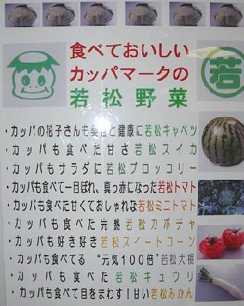 若松カッパ野菜?