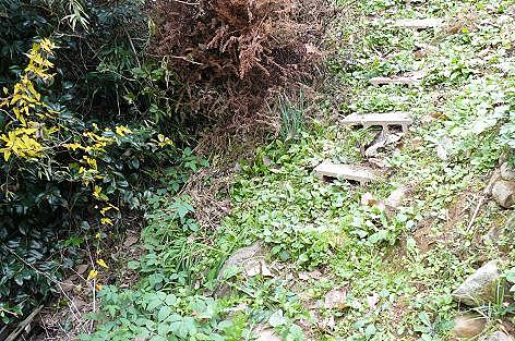 下段の階段横の藪に・・・