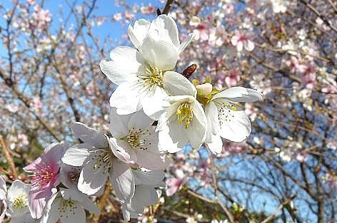 白と二色で咲いていました♪