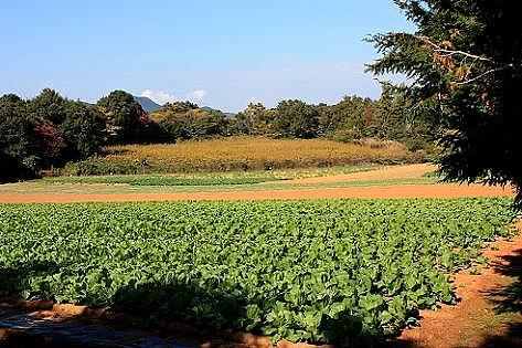 野菜畑の中の・・・♪
