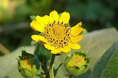 ヤーコンニチワとお花♪