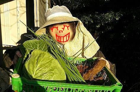 野菜をゲット♪