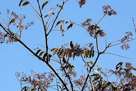 下段の木に小鳥♪