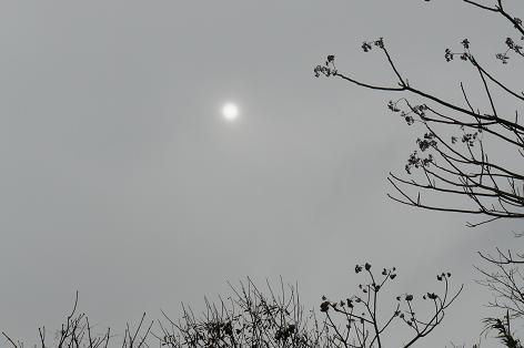ずっと雨のお正月♪