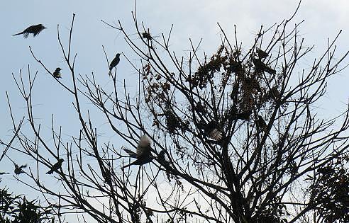 鳥の大群♪