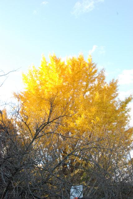 これまた黄色