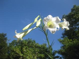 里山 笹の花 004 (1)