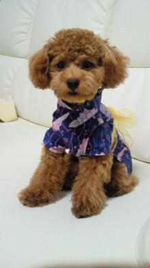 はなちゃん・パンナちゃん・リンちゃんママのブログ-2010073019080000.jpg