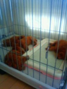 はなちゃん・パンナちゃん・リンちゃんママのブログ-4匹の子犬達
