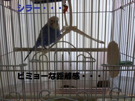 P1000576.jpg