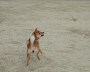 ボールボール