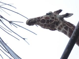 平成22年4月11日動物園2