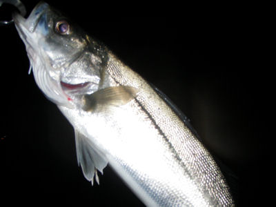 25.3.23 ti-bass