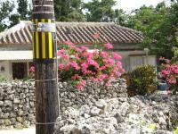 竹富島の街6
