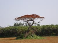 和也君の木