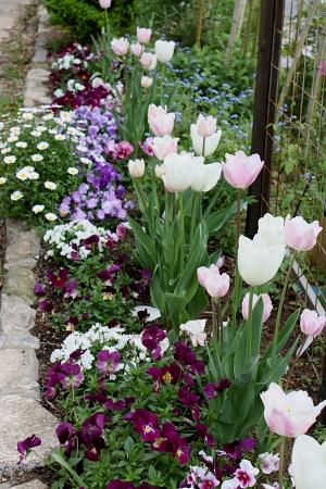 春の花壇2010