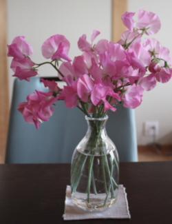 ピンクのスイトピー