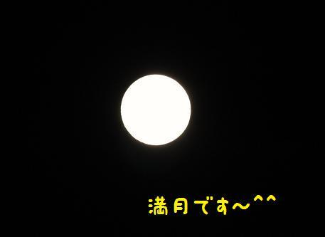 IMG_1259y_20140909185022e09.jpg