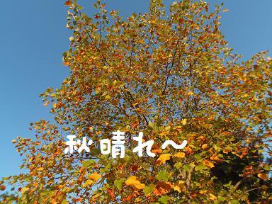 PA251097y_20141027140122c09.jpg