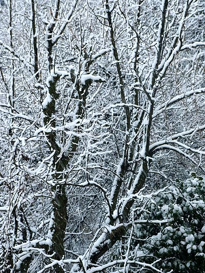ume_snow.jpg